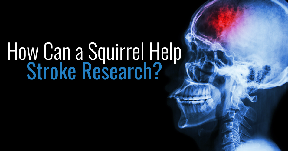 How Can a Squirrel Help Stroke Research?
